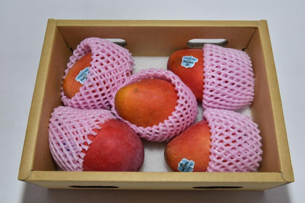 台湾アップルマンゴー2.5kg