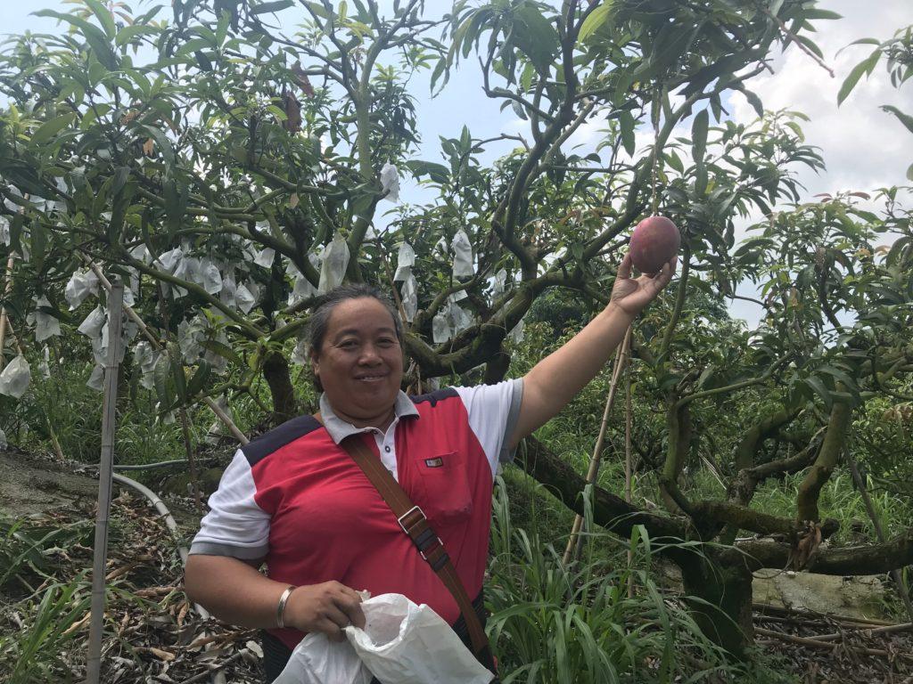 台湾アップルマンゴーの生産者さんです