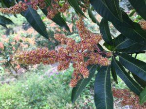 12月末~3月 開花、授粉、結実開始